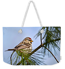 Weekender Tote Bag featuring the photograph Common Redpoll Bird by Christina Rollo