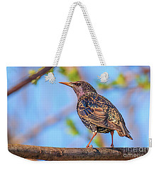 Common Starling - Sturnus Vulgaris Weekender Tote Bag by Jivko Nakev