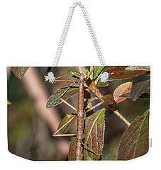 Weekender Tote Bag featuring the photograph Common Walkingstick Or Northern Walkingstick Din0263 by Gerry Gantt