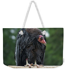 Condor On A Perch Weekender Tote Bag