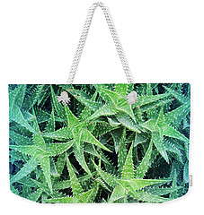 Weekender Tote Bag featuring the photograph Cool Blue Aloevera  by Aimee L Maher Photography and Art Visit ALMGallerydotcom
