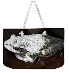 Weekender Tote Bag featuring the photograph Copes Gray Treefrog by Barbara Chichester