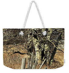 Weekender Tote Bag featuring the photograph Cottonwood Stand by Ann E Robson