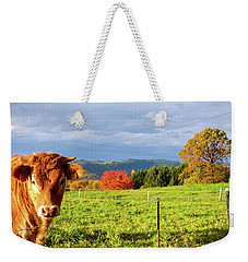 Cow And Autumn Colors  Weekender Tote Bag