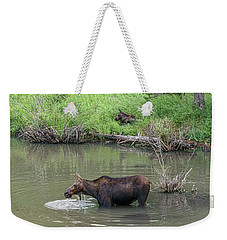 Weekender Tote Bag featuring the photograph Cow Moose And Calf by James BO Insogna