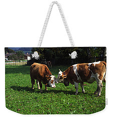 Weekender Tote Bag featuring the photograph Cows Nuzzling by Sally Weigand
