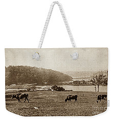 Weekender Tote Bag featuring the photograph Cows On Baker Field by Cole Thompson