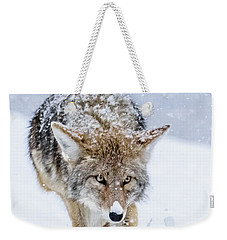 Coyote Coming Through Weekender Tote Bag