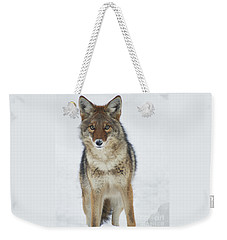 Coyote Looking At Me Weekender Tote Bag by Stanza Widen
