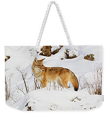 Coyote On Snowy Hill Weekender Tote Bag by Steve McKinzie