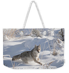 Coyote On The Move Weekender Tote Bag
