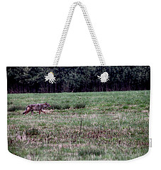 Weekender Tote Bag featuring the photograph Coyote On The Prowl by Bruce Patrick Smith