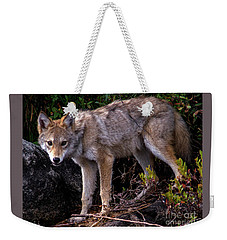 Coyote Portrait Weekender Tote Bag
