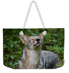 Coyote Soaking Up The Morning Sun Weekender Tote Bag