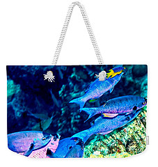 Weekender Tote Bag featuring the photograph Creole Wrasse And Little Spanish Hogfish by Perla Copernik