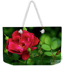 Weekender Tote Bag featuring the photograph Crimson Red Rose By Kaye Menner by Kaye Menner