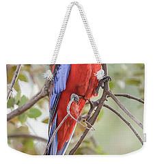 Crimson Rosella 01 Weekender Tote Bag