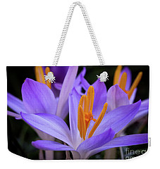Weekender Tote Bag featuring the photograph Crocus Explosion by Douglas Stucky