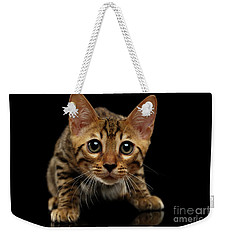 Crouching Bengal Kitty On Black  Weekender Tote Bag by Sergey Taran