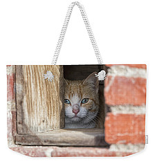 Cubby Cat Weekender Tote Bag