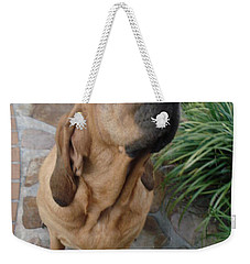Cujo Looking At A Butterfly Weekender Tote Bag by Val Oconnor