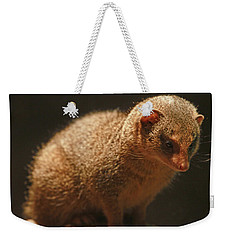 Weekender Tote Bag featuring the photograph Curiosity At Rest by Laddie Halupa