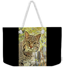 Weekender Tote Bag featuring the photograph Curiosity The Bobcat by Jessica Brawley