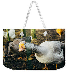 Curious Grey Goose Weekender Tote Bag by Pati Photography