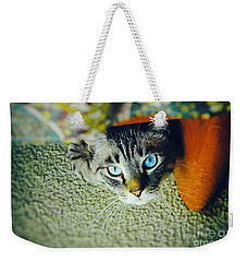 Weekender Tote Bag featuring the photograph Curious Kitty by Silvia Ganora