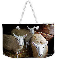 Curious Sheep Weekender Tote Bag by Kevin Fortier