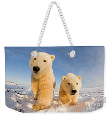 Curious Two Weekender Tote Bag by Steven Kazlowski