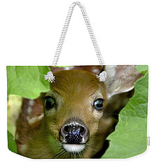 Curous Fawn Weekender Tote Bag by Adam Olsen