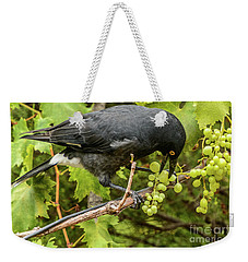 Currawong On A Vine Weekender Tote Bag
