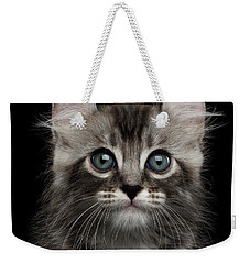 Cute American Curl Kitten With Twisted Ears Isolated Black Background Weekender Tote Bag by Sergey Taran