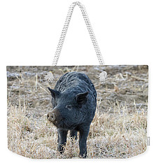 Weekender Tote Bag featuring the photograph Cute Black Pig by James BO Insogna