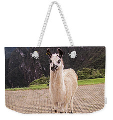 Cute Llama Posing For Picture Weekender Tote Bag