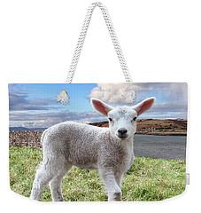 Cute Spring Lamb Posing Beside The Wild Atlantic Way In Ireland Weekender Tote Bag