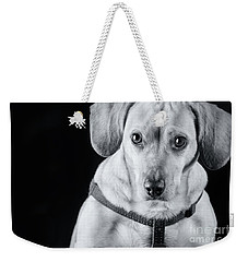 Dachshund Lab Mix Weekender Tote Bag