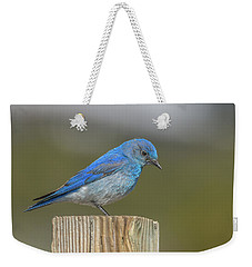 Daddy Bluebird Guarding Nest Weekender Tote Bag