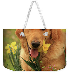 Weekender Tote Bag featuring the photograph Daffodil Dreams by Kim Henderson