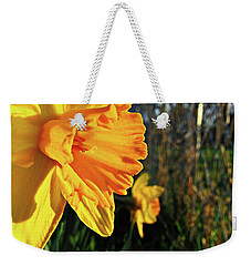Weekender Tote Bag featuring the photograph Daffodil Evening by Robert Knight