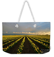 Weekender Tote Bag featuring the photograph Daffodil Storm by Mike Dawson