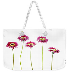 Weekender Tote Bag featuring the photograph Daisies In A Row by Rebecca Cozart