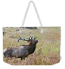 Weekender Tote Bag featuring the photograph Dapper Dan by Gary Lengyel