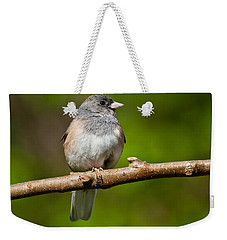 Dark Eyed Junco Perched On A Branch Weekender Tote Bag