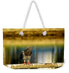 Daytona Beach Pigeon Weekender Tote Bag