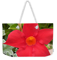 Mandevilla Deep Red Flower Weekender Tote Bag