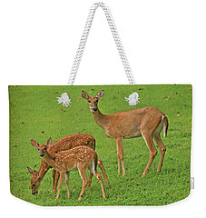 Weekender Tote Bag featuring the photograph Deer Family by Rick Friedle