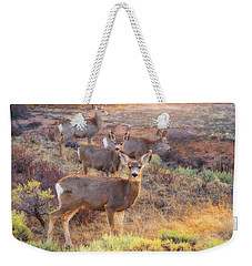 Weekender Tote Bag featuring the photograph Deer In The Sunlight by Darren White