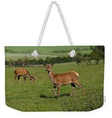 Deers On A Hill Pasture. Weekender Tote Bag